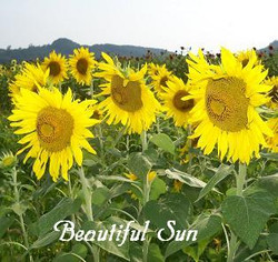 Beautifulsun