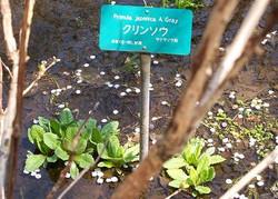Nikkohsyokubutuen_039