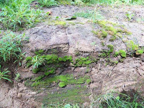 芝生の土塀